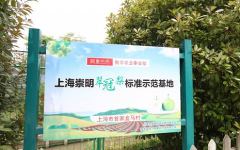 """数字乡村建设进行时:阿里巴巴打造上海首个""""盒马村"""""""