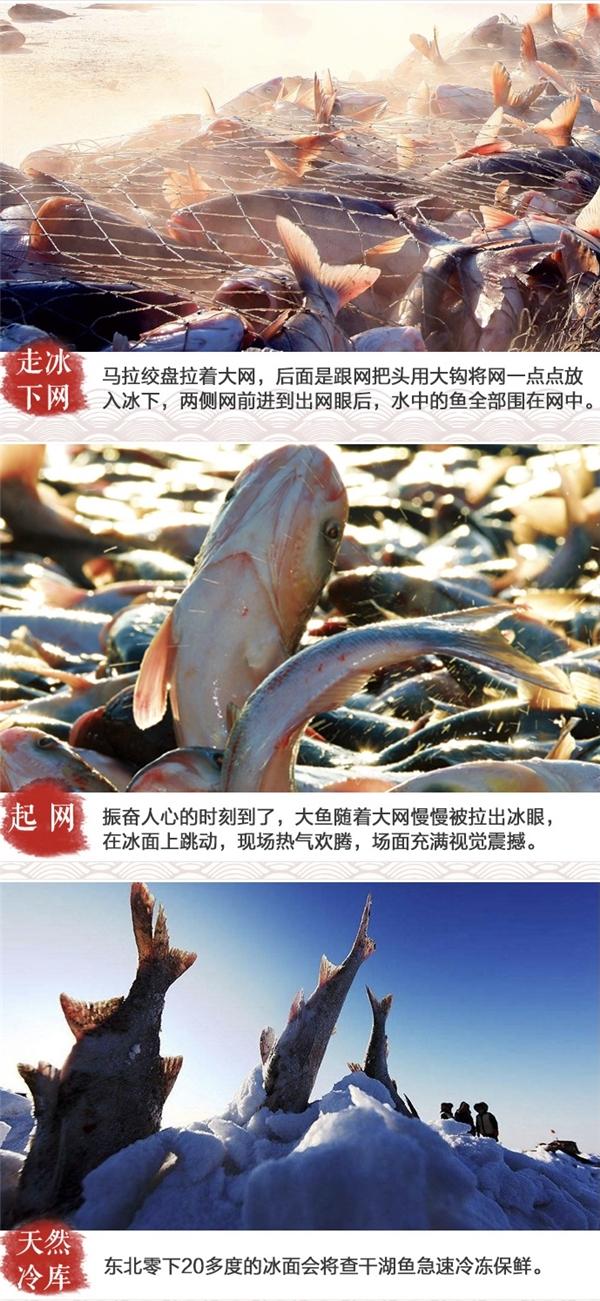 查干湖鱼跨越三千公里,成都七鲜新店带来地道东北味